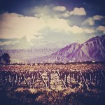 malbec-wijnen-vinopio-be