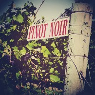 pinot-noir-vinopio-be