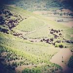 syrah-shiraz-wijn-vinopio-be
