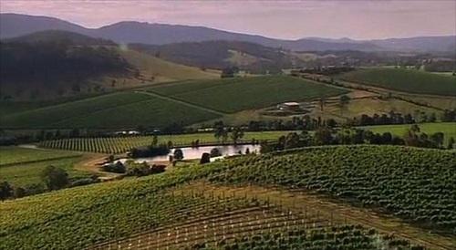 de-bortoli-south-eastern-australie-wijngaard-vinopio-be